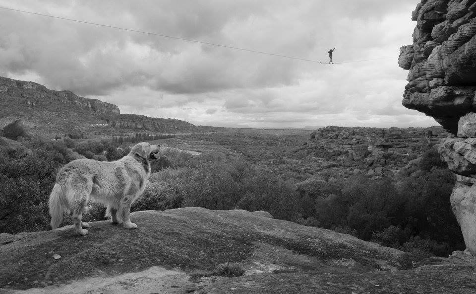 Harry the hound taking in the panorama - Peter Samuelsson